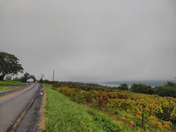 Misty vineyards outside Hammondsport