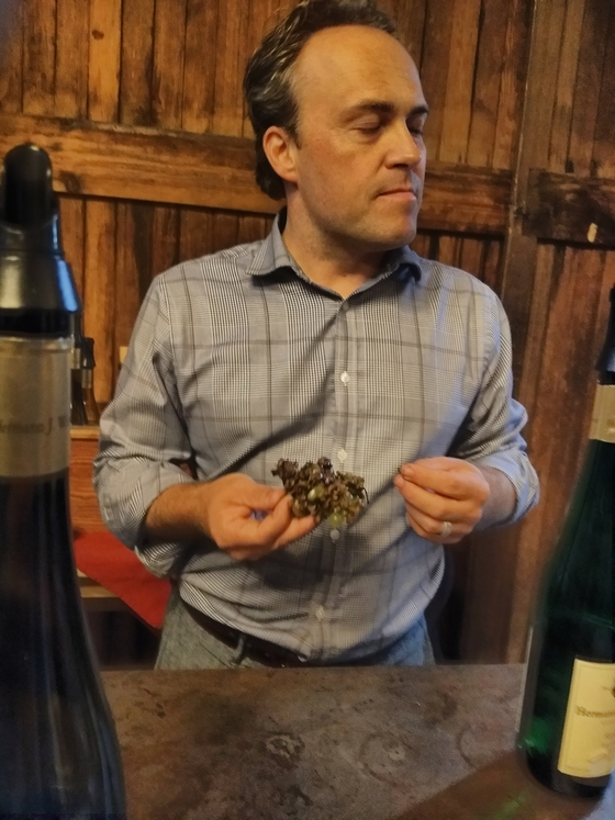 The estate manager of Wiemer with some botrytized grapes